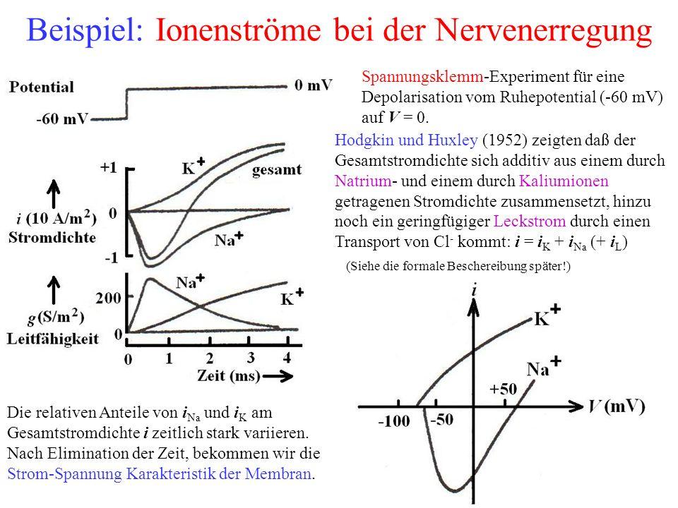 Beispiel: Ionenströme bei der Nervenerregung