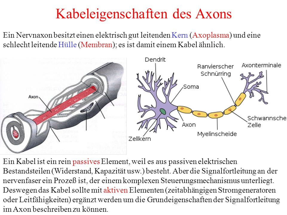 Kabeleigenschaften des Axons