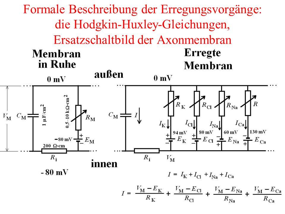 Formale Beschreibung der Erregungsvorgänge: die Hodgkin-Huxley-Gleichungen, Ersatzschaltbild der Axonmembran