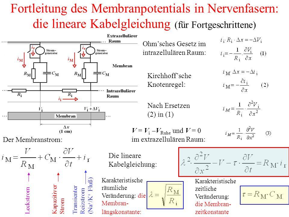Fortleitung des Membranpotentials in Nervenfasern: die lineare Kabelgleichung (für Fortgeschrittene)