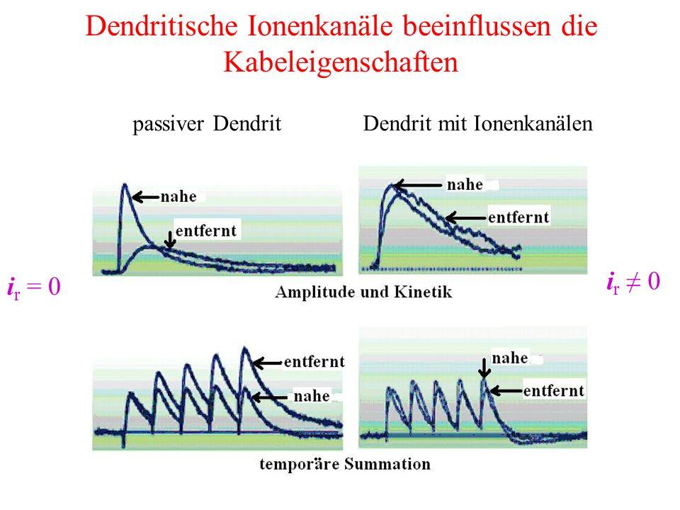 Dendritische Ionenkanäle beeinflussen die Kabeleigenschaften