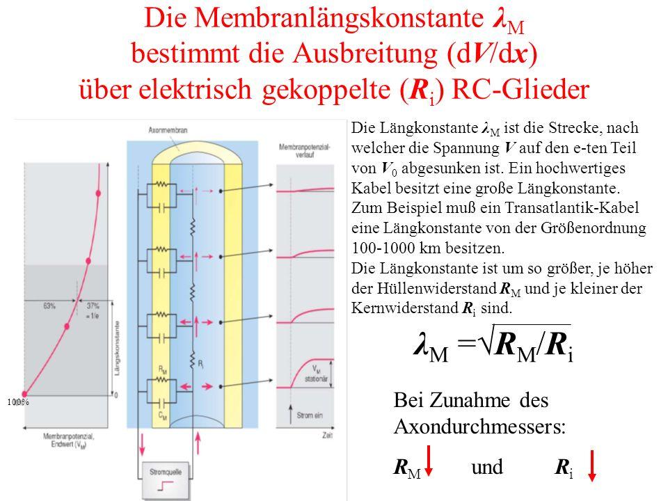 Die Membranlängskonstante λM bestimmt die Ausbreitung (dV/dx) über elektrisch gekoppelte (Ri) RC-Glieder