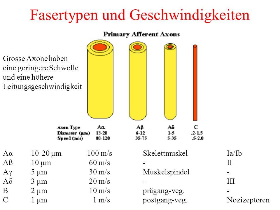 Fasertypen und Geschwindigkeiten