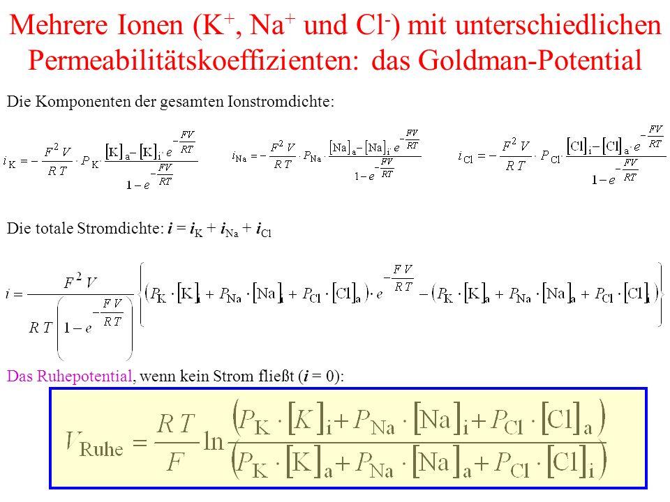 Mehrere Ionen (K+, Na+ und Cl-) mit unterschiedlichen Permeabilitätskoeffizienten: das Goldman-Potential