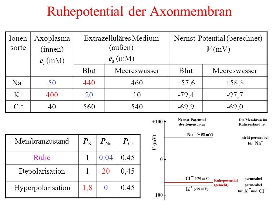 Ruhepotential der Axonmembran