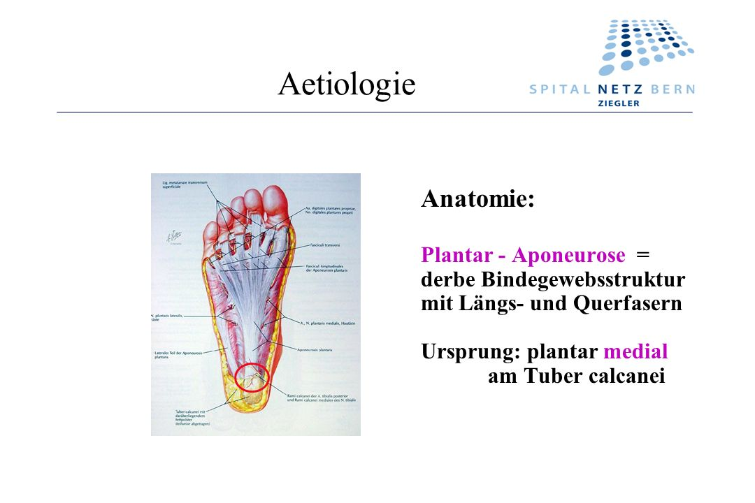 Aetiologie Anatomie: