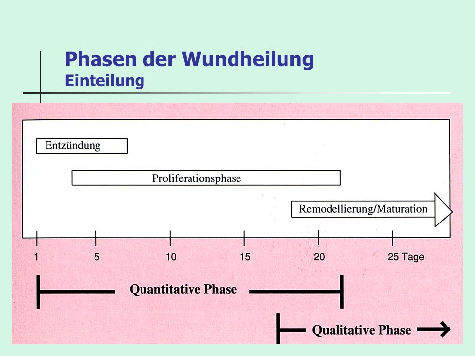 Phasen der Wundheilung Einteilung