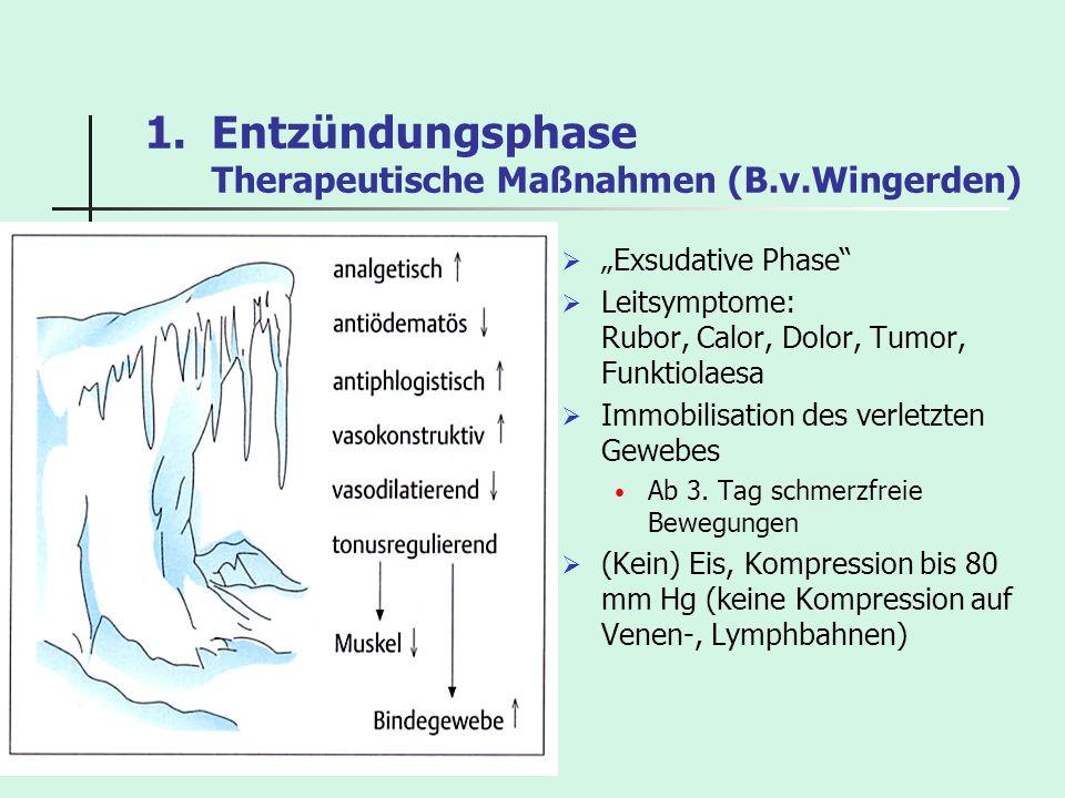 Entzündungsphase Therapeutische Maßnahmen (B.v.Wingerden)