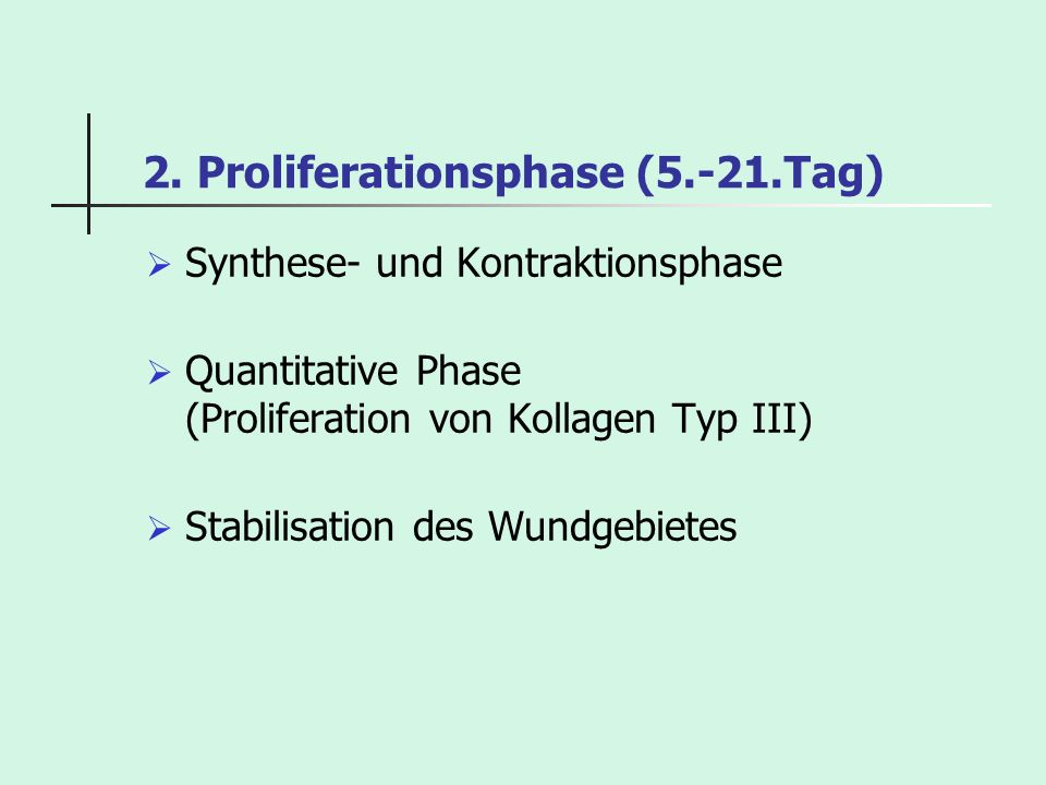 2. Proliferationsphase (5.-21.Tag)