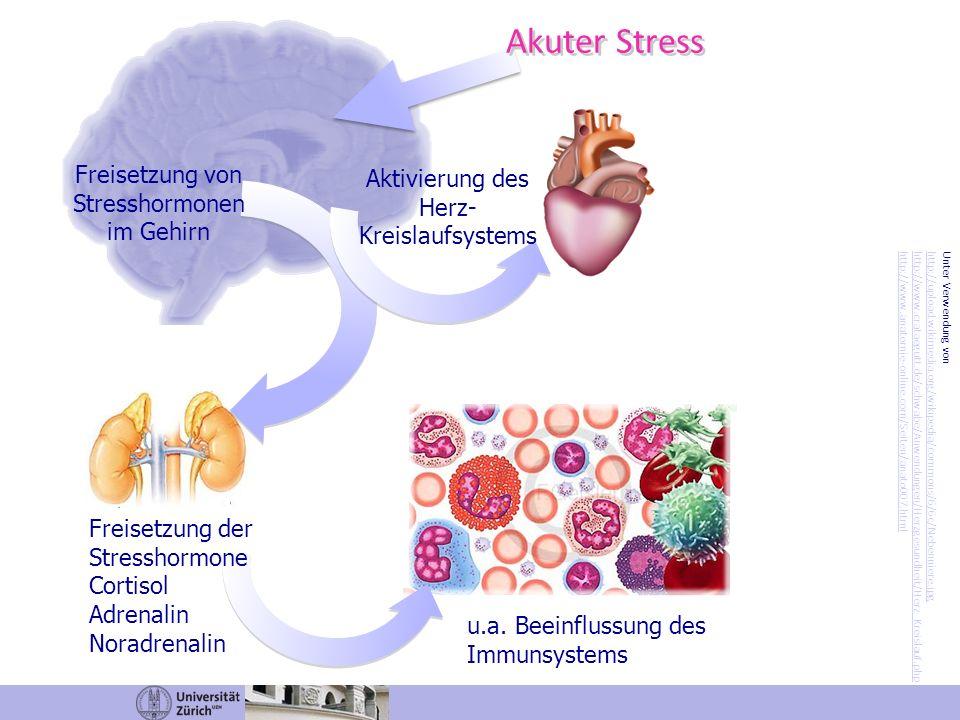 Akuter Stress Freisetzung von Stresshormonen im Gehirn