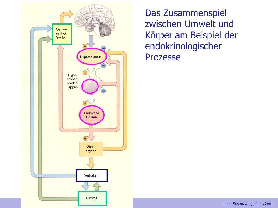 Das Zusammenspiel zwischen Umwelt und Körper am Beispiel der endokrinologischer Prozesse
