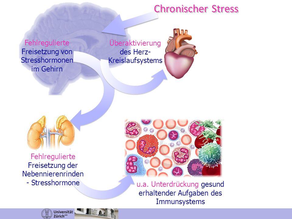 Chronischer Stress Fehlregulierte Freisetzung von Stresshormonen