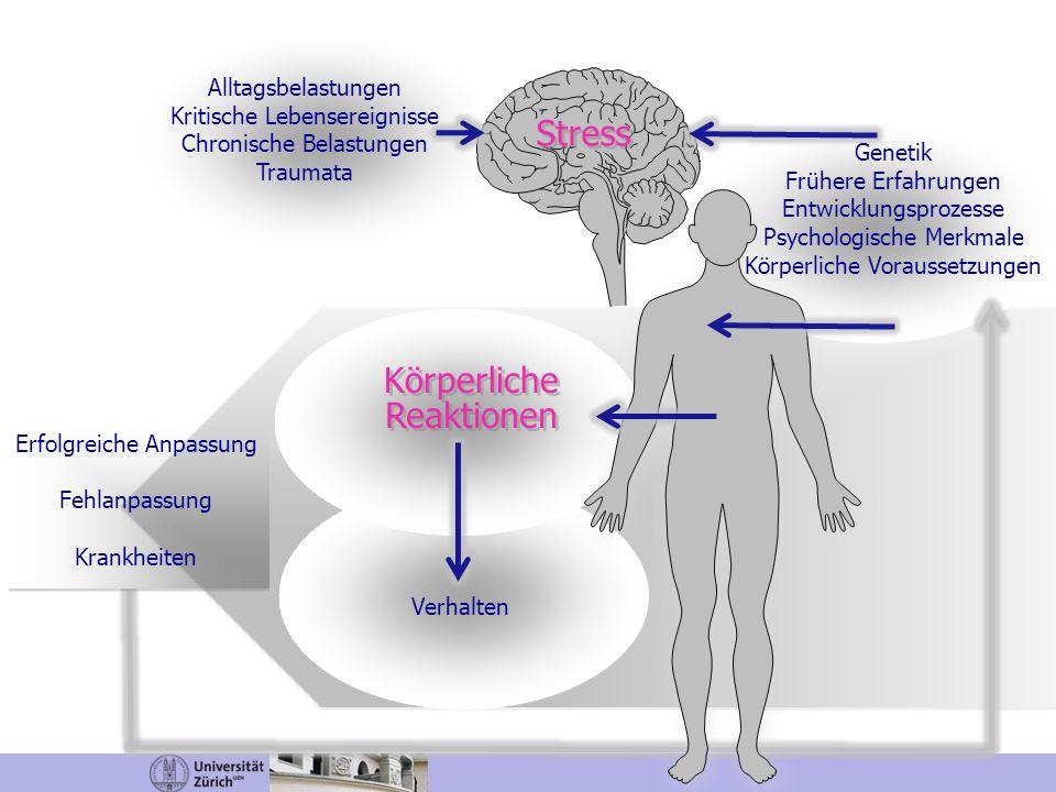 Stress Körperliche Reaktionen Alltagsbelastungen