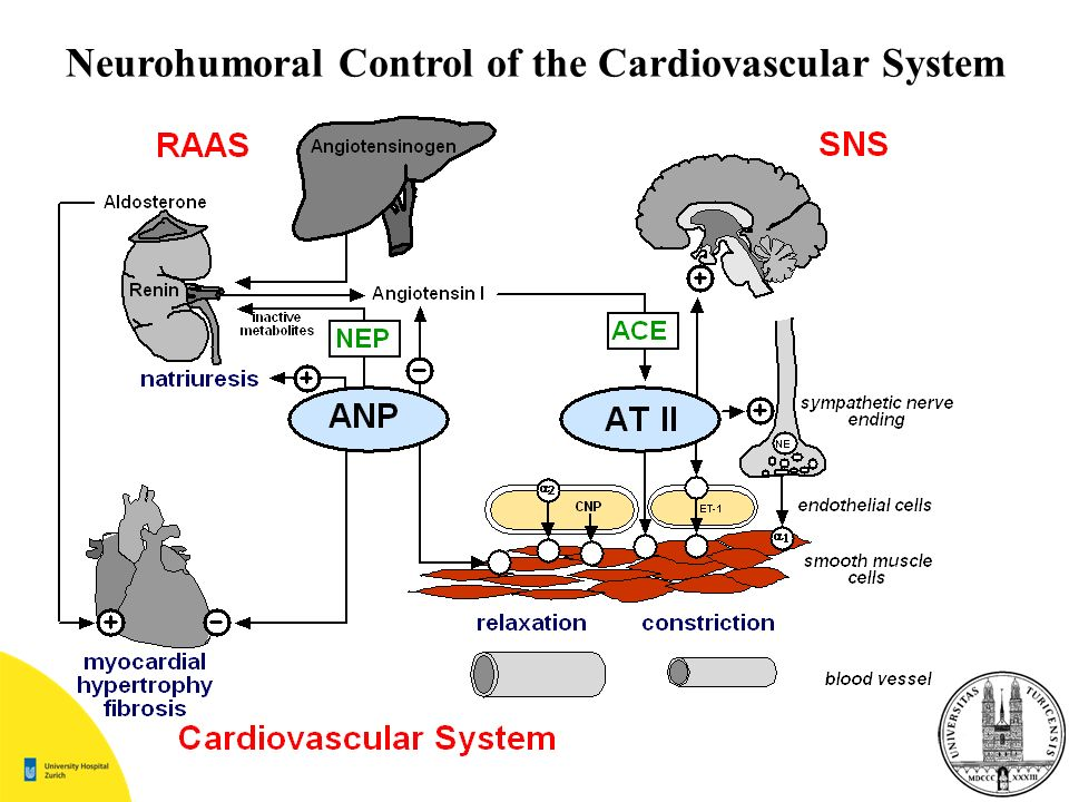 Neurohumoral Control of the Cardiovascular System
