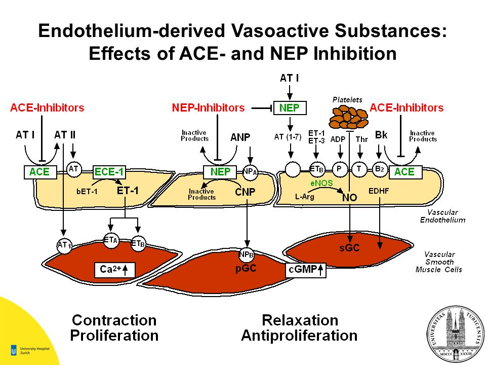 Endothelium-derived Vasoactive Substances: