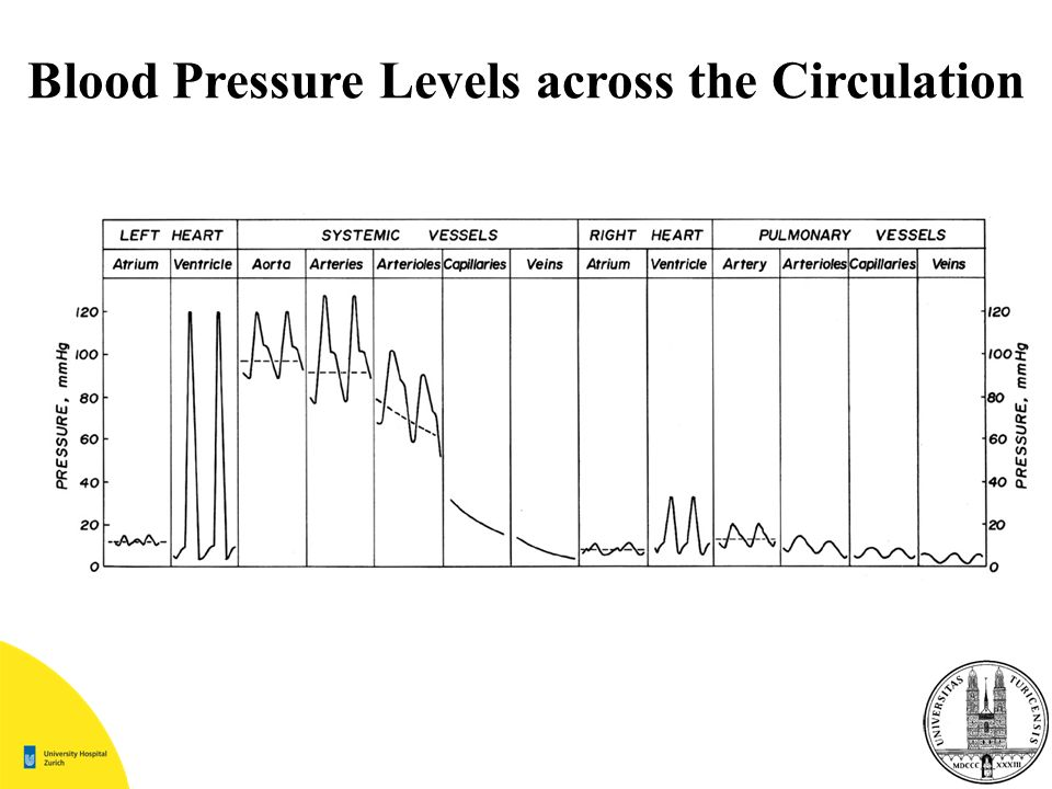 Blood Pressure Levels across the Circulation