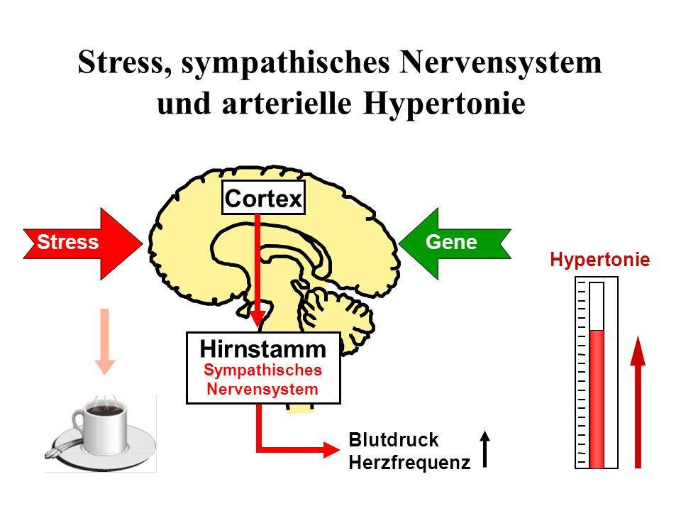 Stress, sympathisches Nervensystem und arterielle Hypertonie