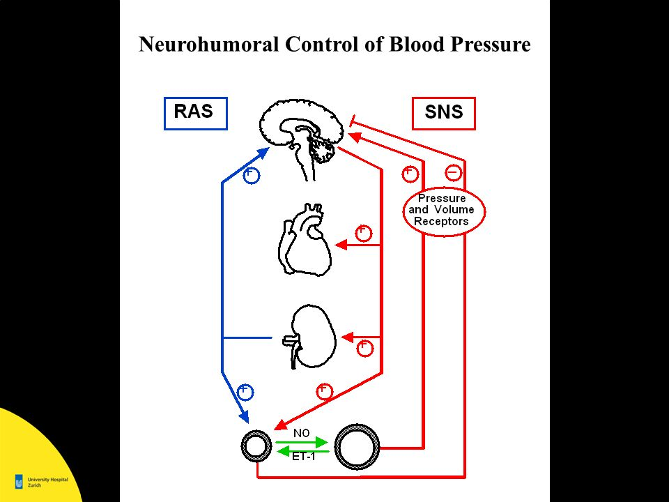 Neurohumoral Control of Blood Pressure