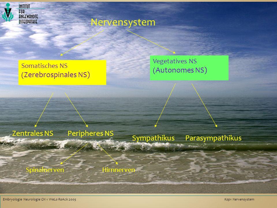 Nervensystem Zentrales NS Peripheres NS Sympathikus Parasympathikus