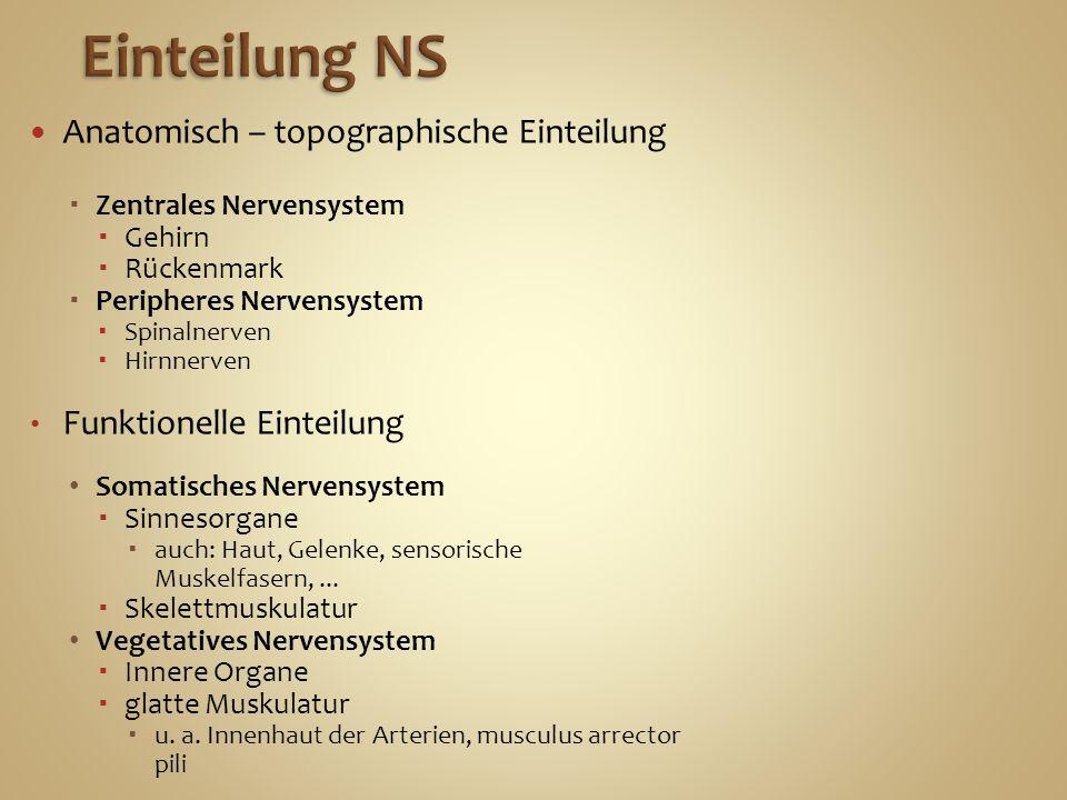 Einteilung NS Anatomisch – topographische Einteilung
