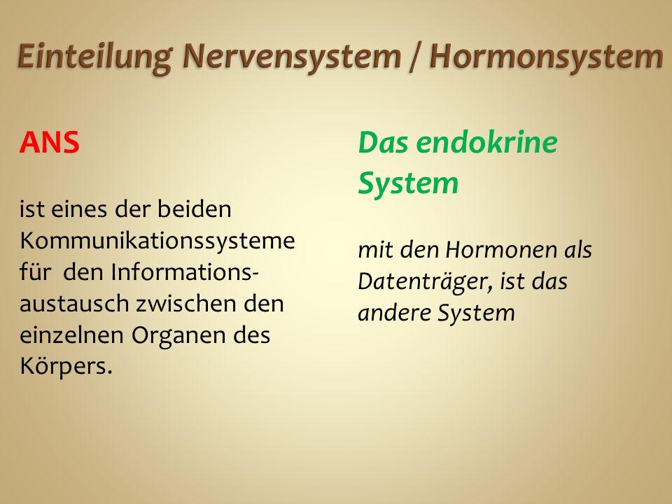 Einteilung Nervensystem / Hormonsystem