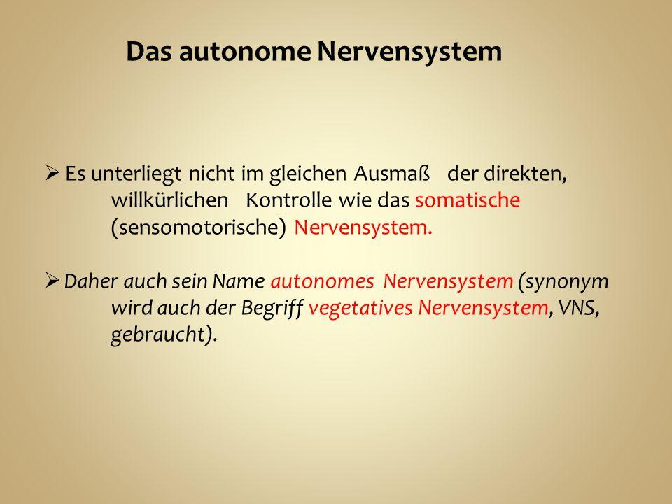 Das autonome Nervensystem