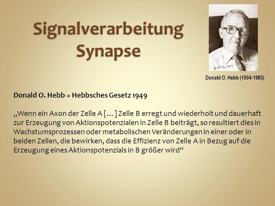 Signalverarbeitung Synapse