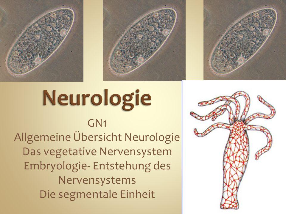 Neurologie GN1 Allgemeine Übersicht Neurologie