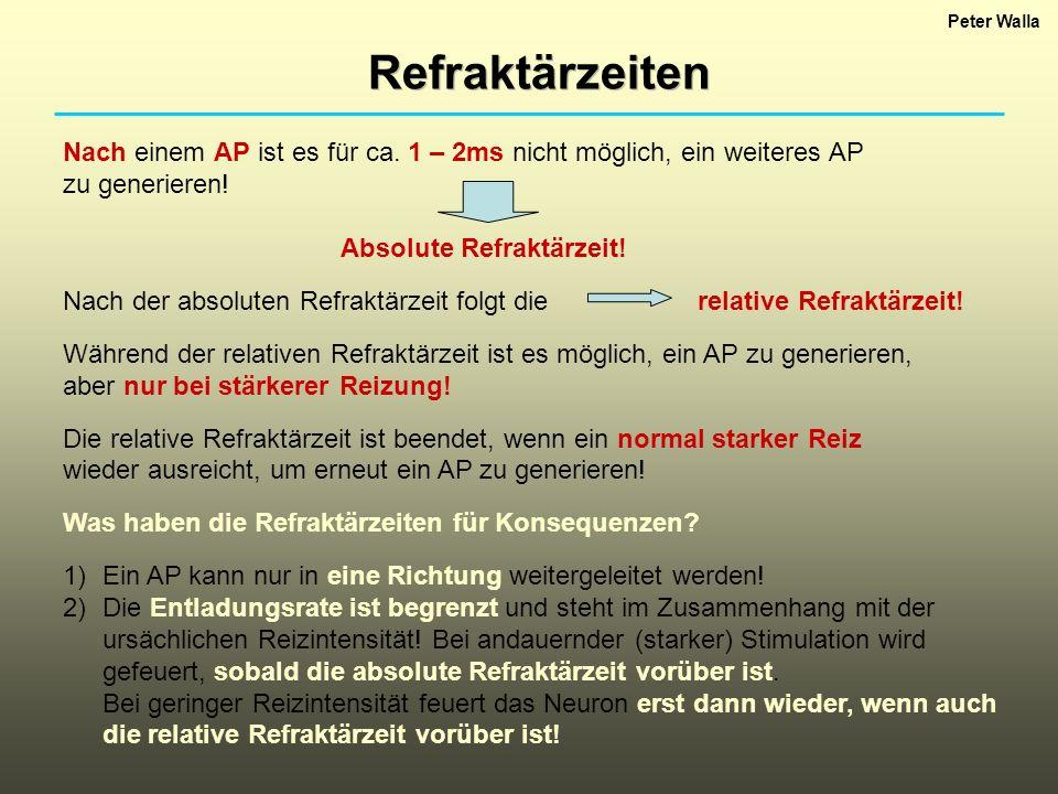 Peter Walla Refraktärzeiten. Nach einem AP ist es für ca. 1 – 2ms nicht möglich, ein weiteres AP. zu generieren!