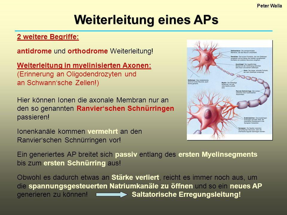 Weiterleitung eines APs