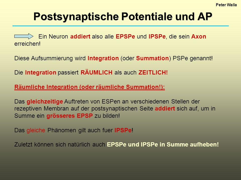 Postsynaptische Potentiale und AP