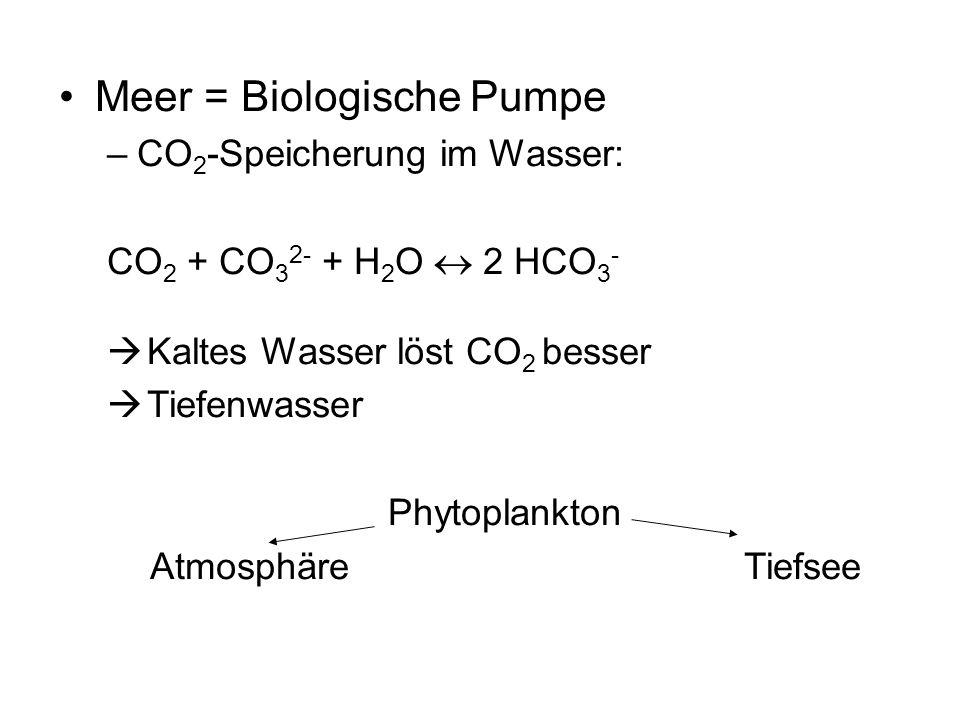 Meer = Biologische Pumpe