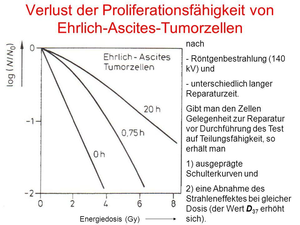 Verlust der Proliferationsfähigkeit von Ehrlich-Ascites-Tumorzellen