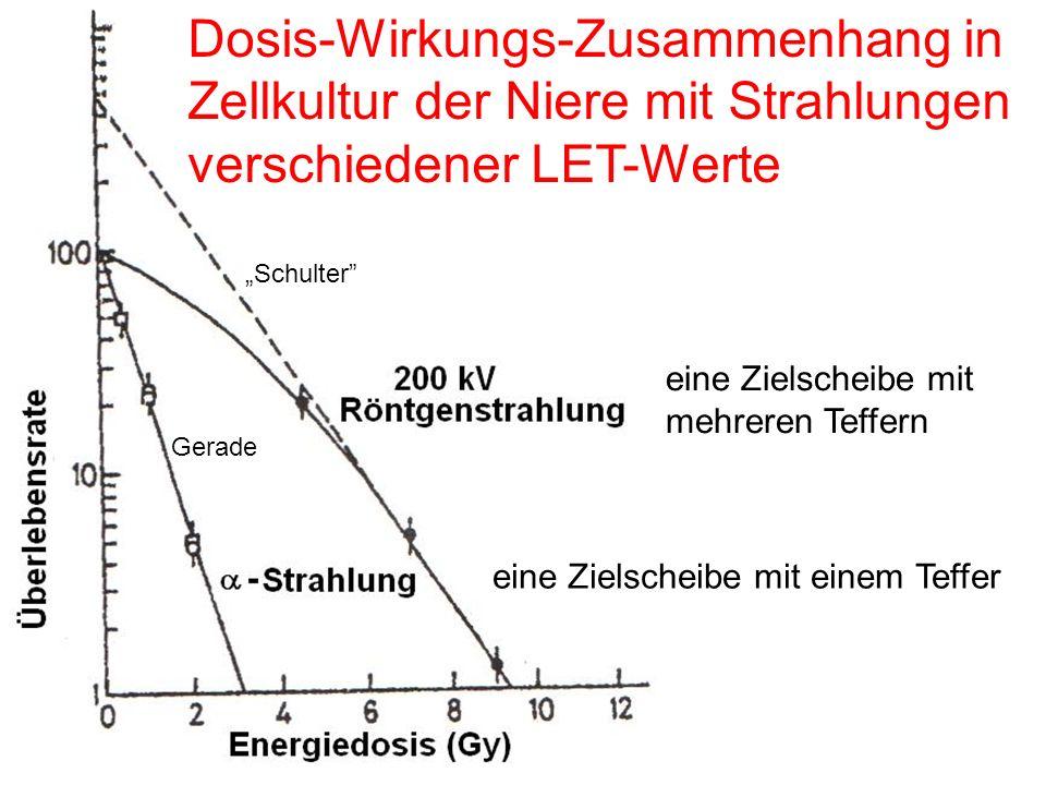 Dosis-Wirkungs-Zusammenhang in Zellkultur der Niere mit Strahlungen verschiedener LET-Werte
