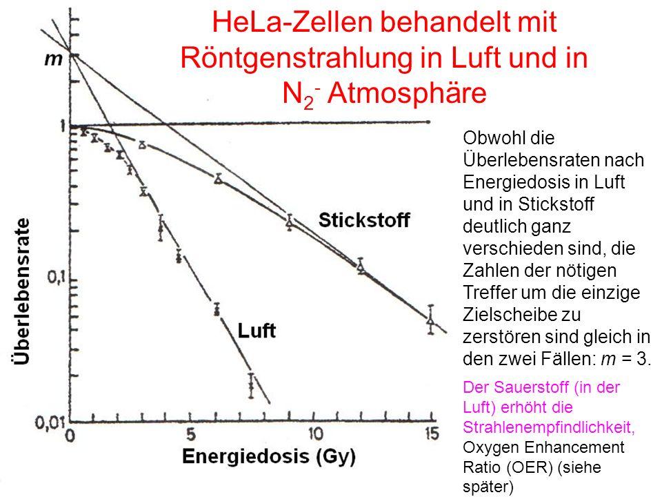 HeLa-Zellen behandelt mit Röntgenstrahlung in Luft und in N2- Atmosphäre