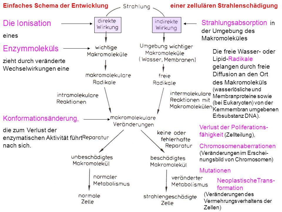 Die Ionisation Enzymmoleküls