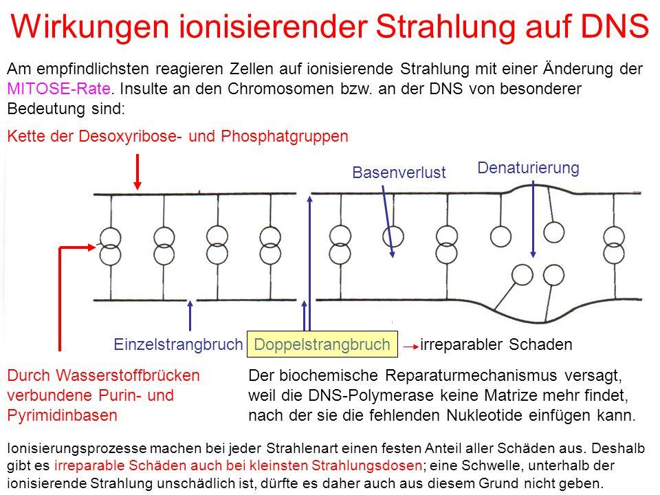 Wirkungen ionisierender Strahlung auf DNS