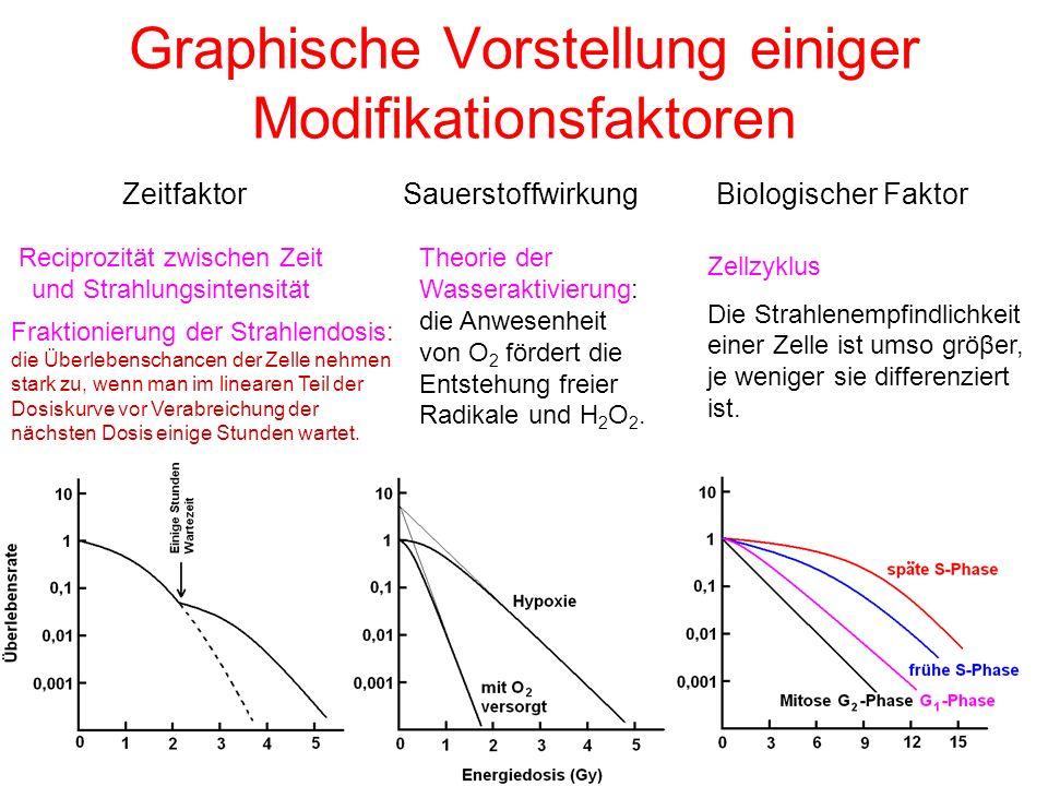 Graphische Vorstellung einiger Modifikationsfaktoren