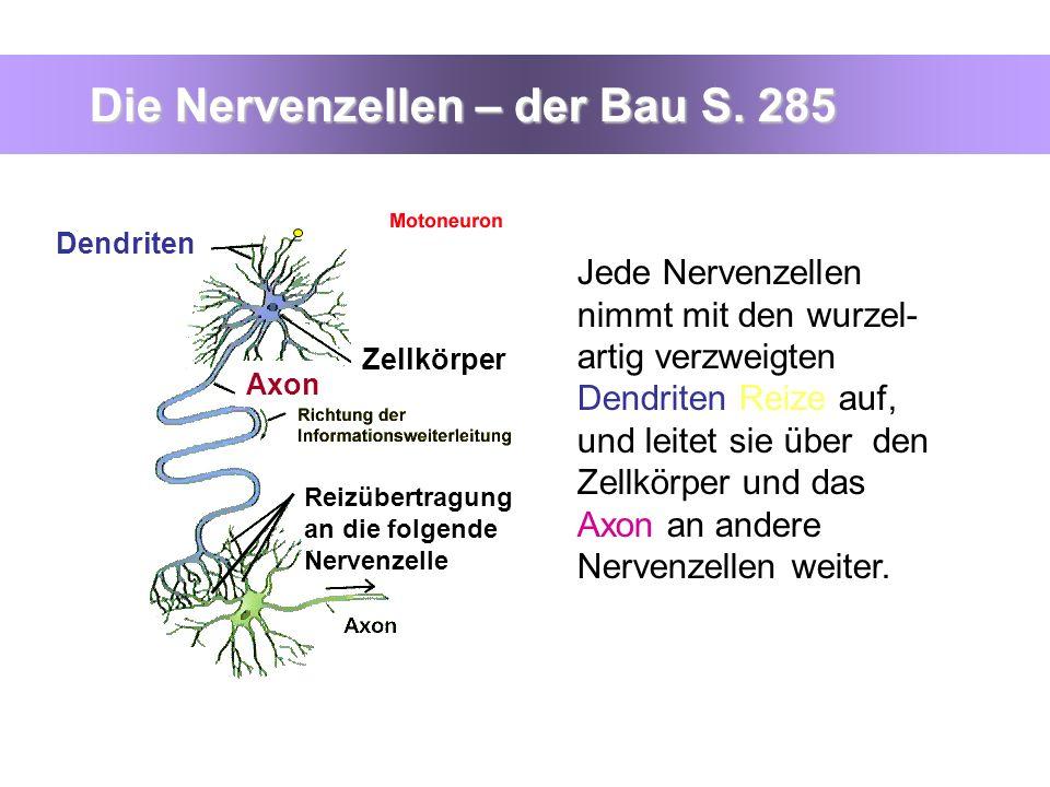 Die Nervenzellen – der Bau S. 285