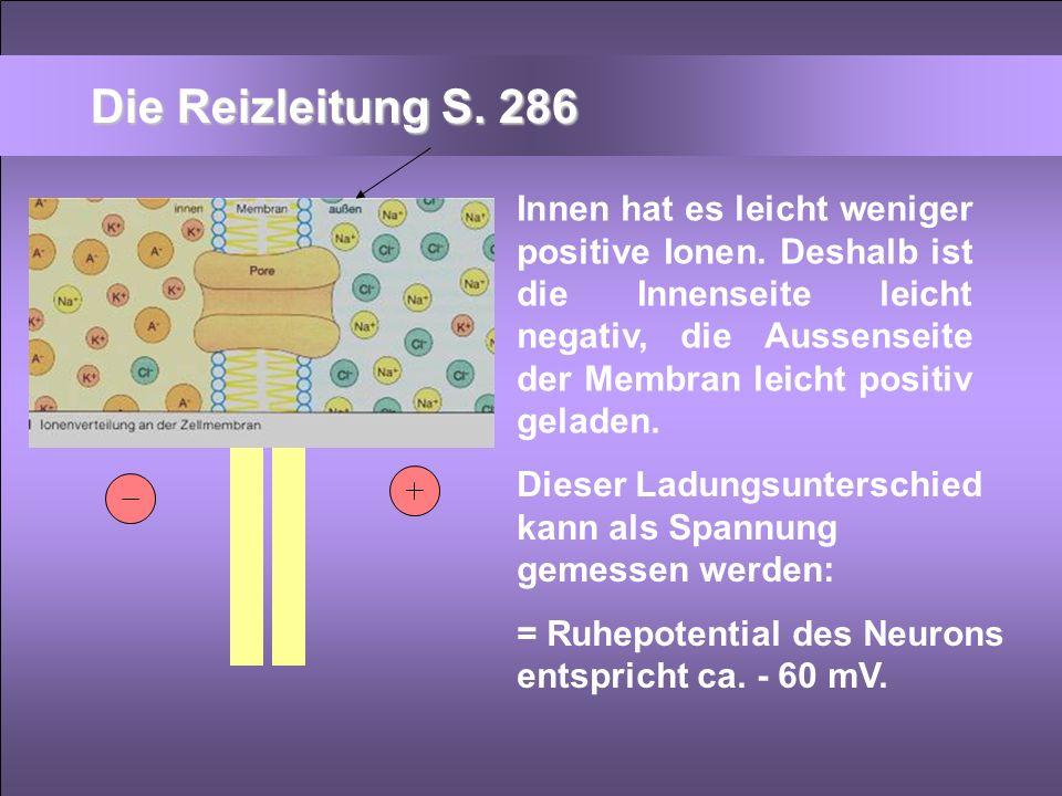 Die Reizleitung S. 286