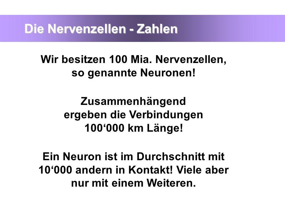 Die Nervenzellen - Zahlen