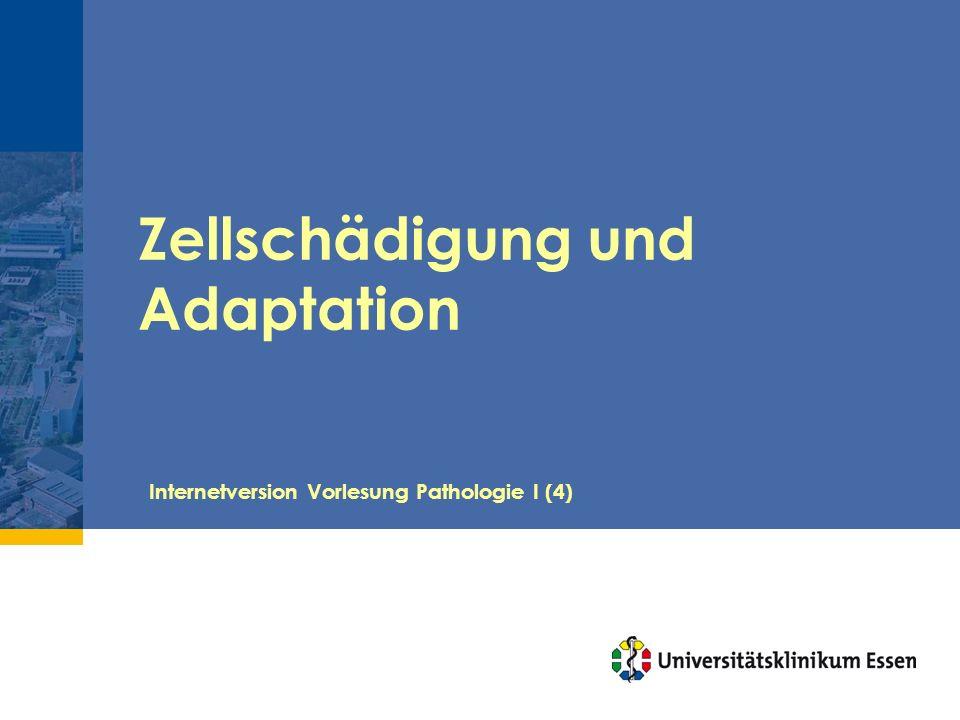 Zellschädigung und Adaptation