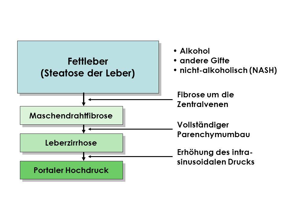 Fettleber (Steatose der Leber)