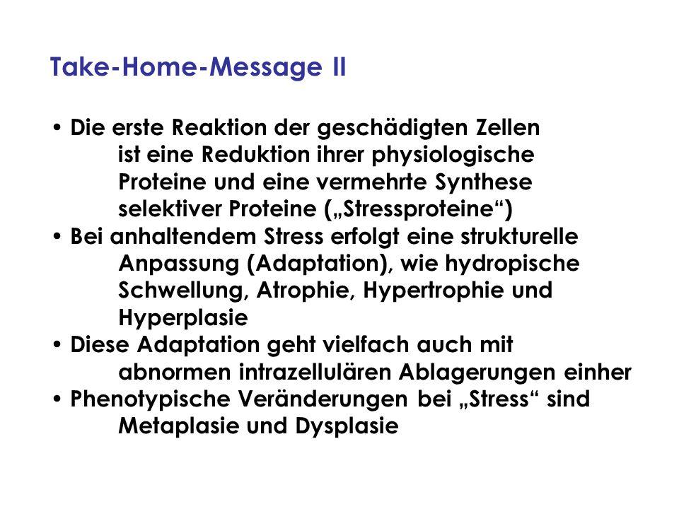 Take-Home-Message II Die erste Reaktion der geschädigten Zellen