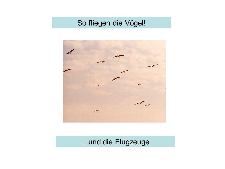 So fliegen die Vögel! sowas …und die Flugzeuge
