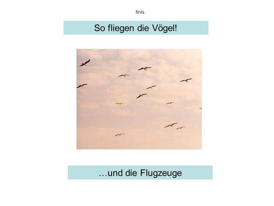 finis So fliegen die Vögel! …und die Flugzeuge sowas