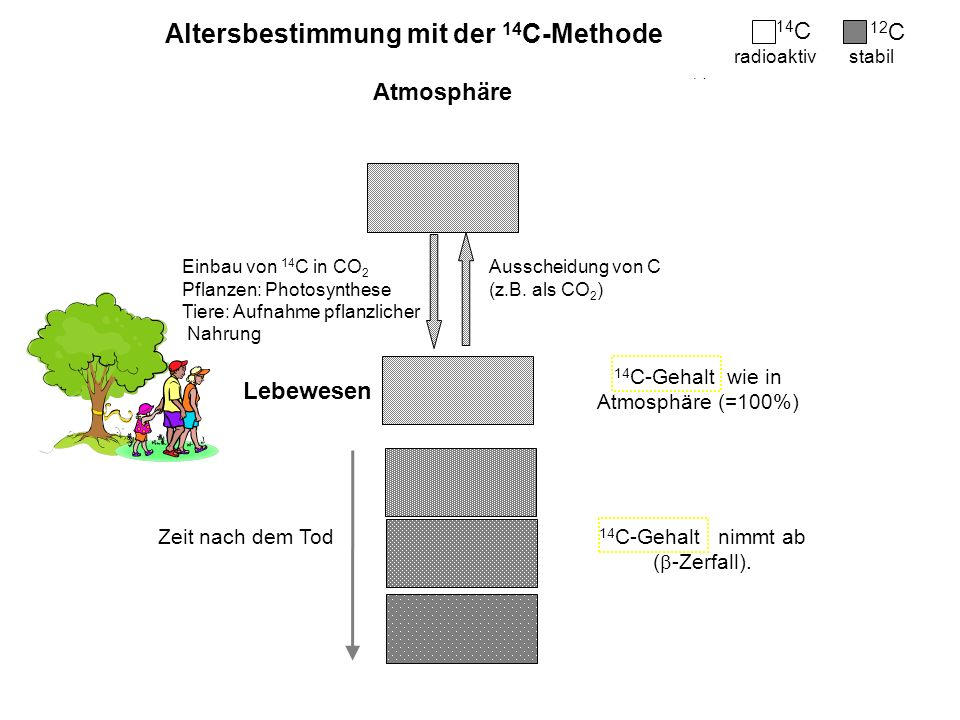 Altersbestimmung mit der 14C-Methode