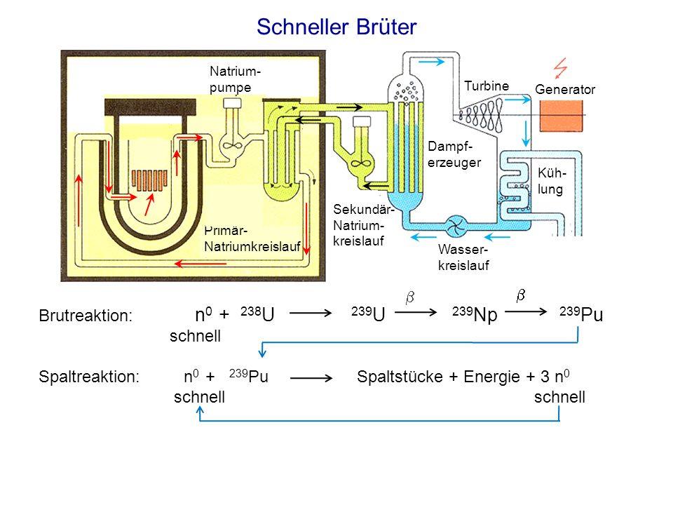 Schneller Brüter b  Brutreaktion: n0 + 238U 239U 239Np 239Pu schnell