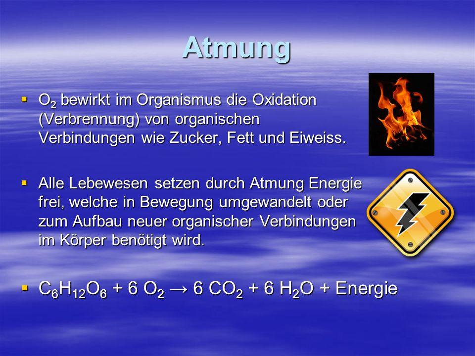 Atmung C6H12O6 + 6 O2 → 6 CO2 + 6 H2O + Energie