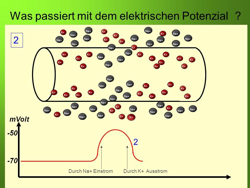Was passiert mit dem elektrischen Potenzial